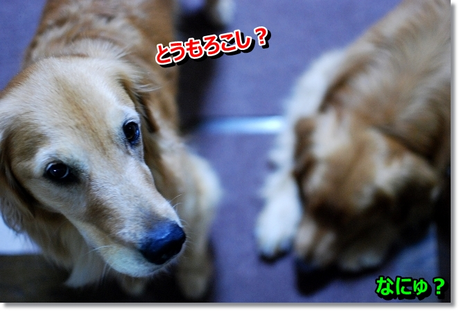 DSC_0004_20130715103902.jpg
