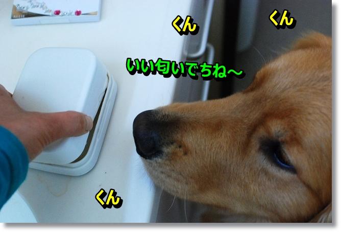 DSC_0005_20130609013536.jpg