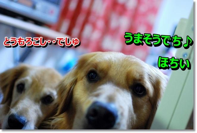 DSC_0010_20130715103947.jpg
