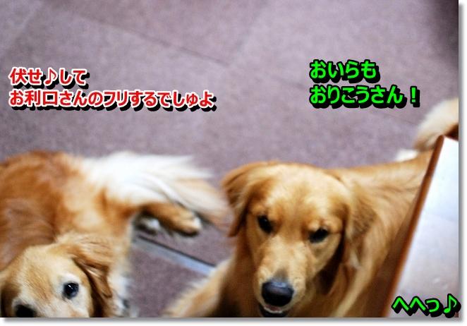 DSC_0012_20130715103949.jpg