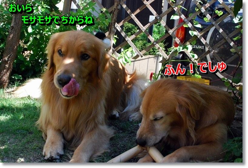DSC_0014_20141108083700648.jpg