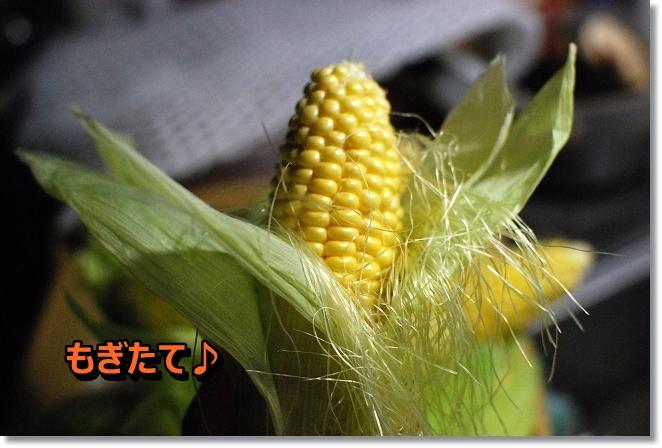 DSC_0020_20130715103952.jpg
