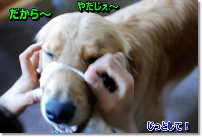 DSC_0087_2013073119481945c.jpg