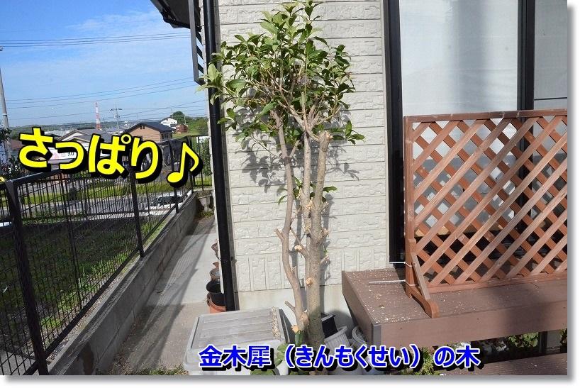 DSC_1547_201410300950324a1.jpg
