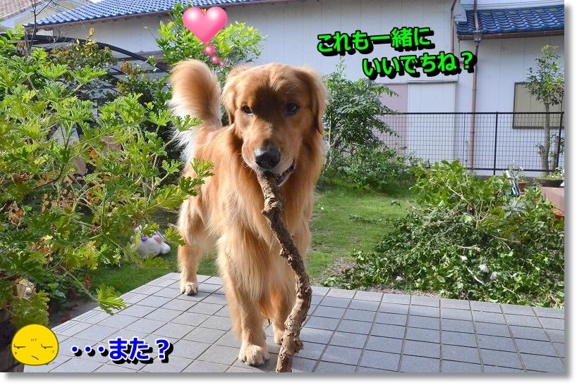 DSC_1598_20141030095127377.jpg