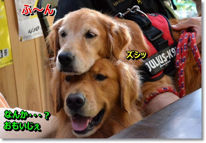 DSC_2644_20141024204635e32.jpg