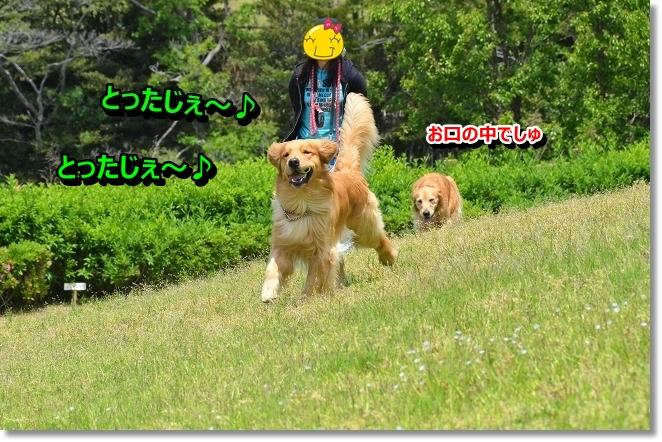 DSC_3206_20130604201818.jpg