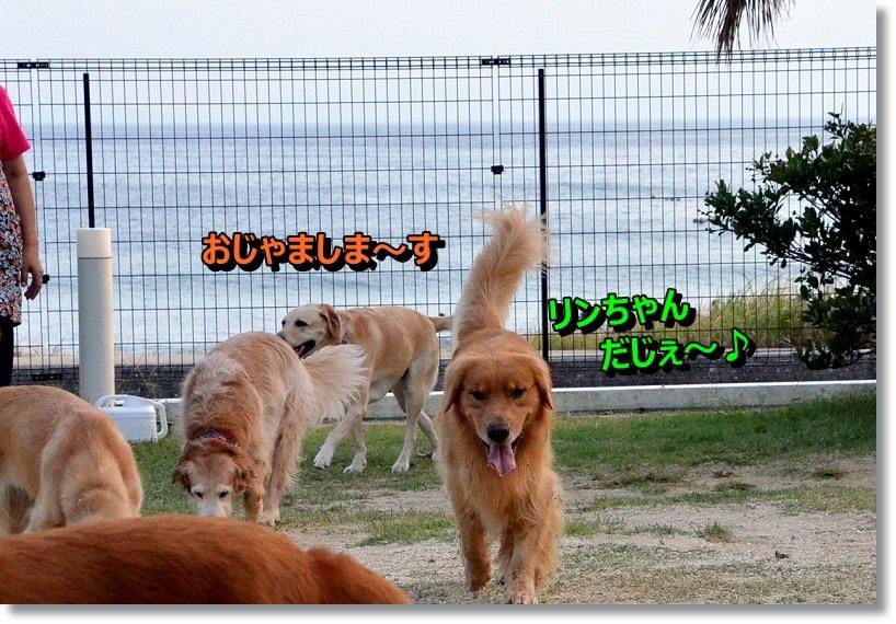 DSC_3308_201411212005001a8.jpg