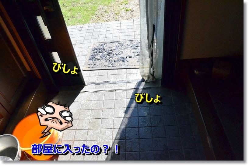 DSC_3450.jpg