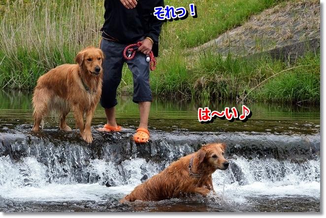DSC_3472_20130530091525.jpg