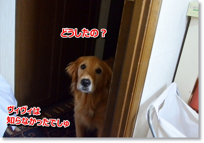 DSC_3632_20130609013555.jpg
