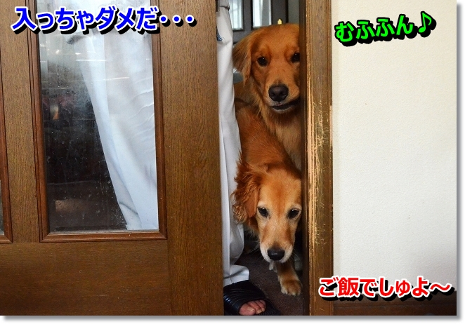DSC_3985.jpg