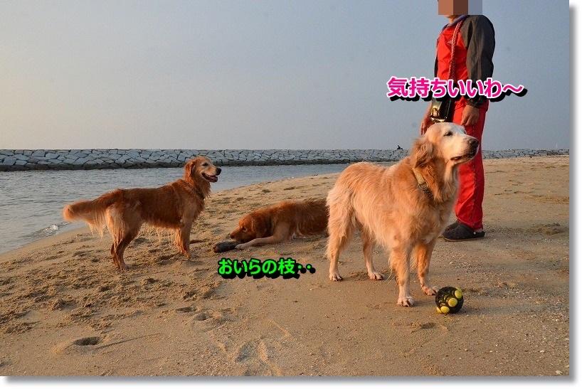 DSC_3997_2014110710150323f.jpg