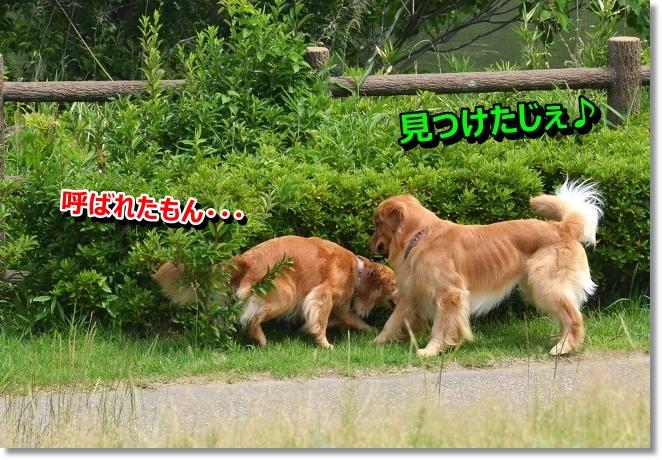 DSC_4003.jpg