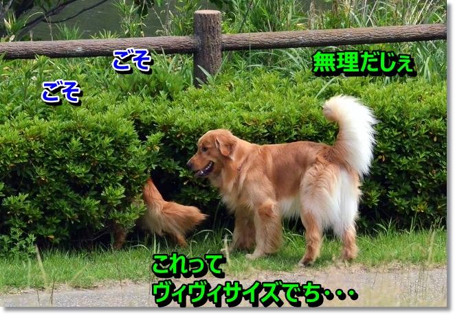 DSC_4006.jpg