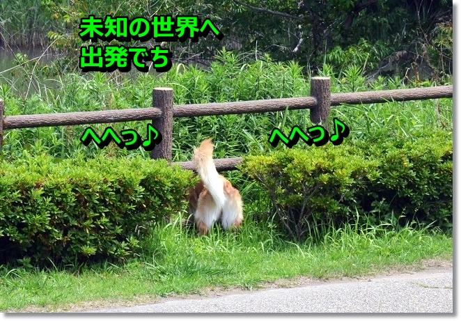DSC_4009.jpg