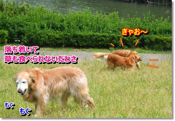 DSC_4017.jpg