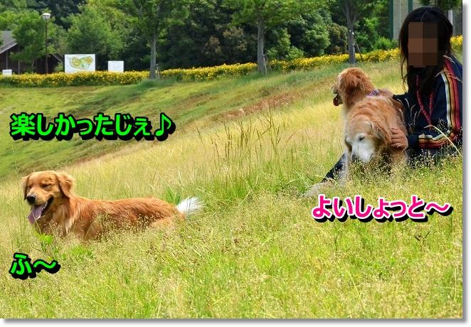DSC_4031.jpg