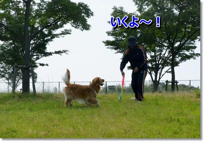 DSC_4179_20130629195036.jpg
