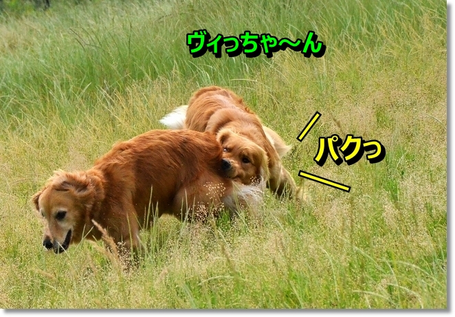 DSC_4209.jpg