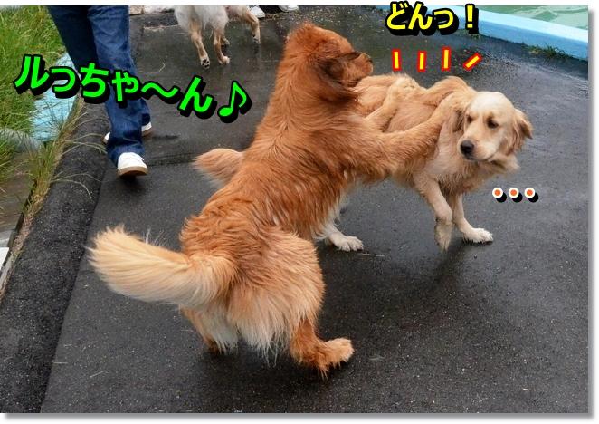 DSC_4375_20130612013256.jpg