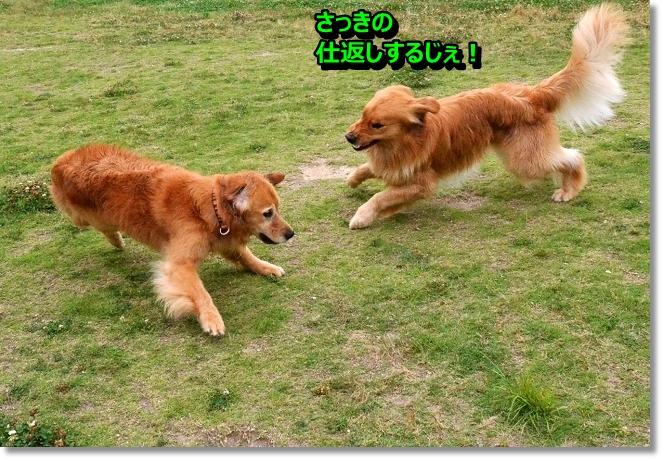 DSC_4442_20130612210425.jpg