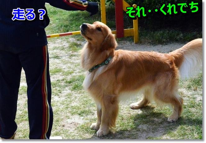 DSC_4560.jpg