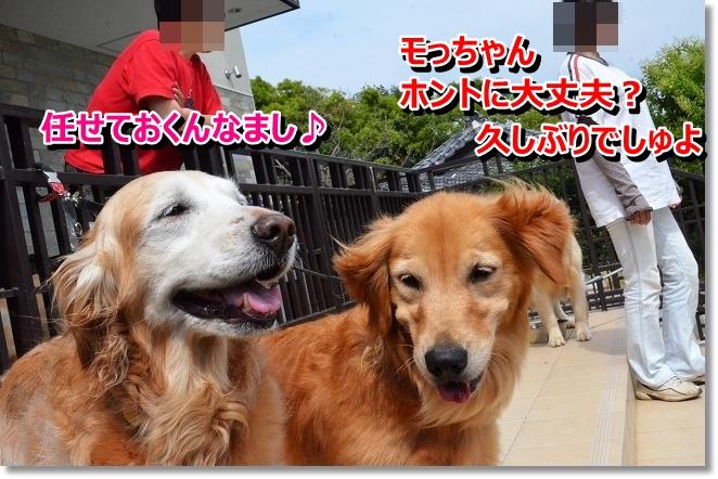 DSC_4569_20130624234544.jpg