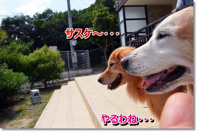 DSC_4630.jpg