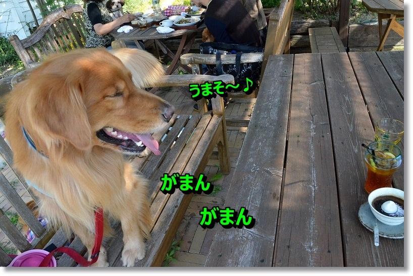 DSC_4869_20141021203404c4e.jpg