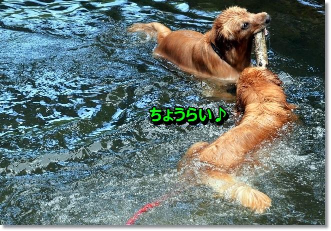 DSC_4945_20130618213613.jpg