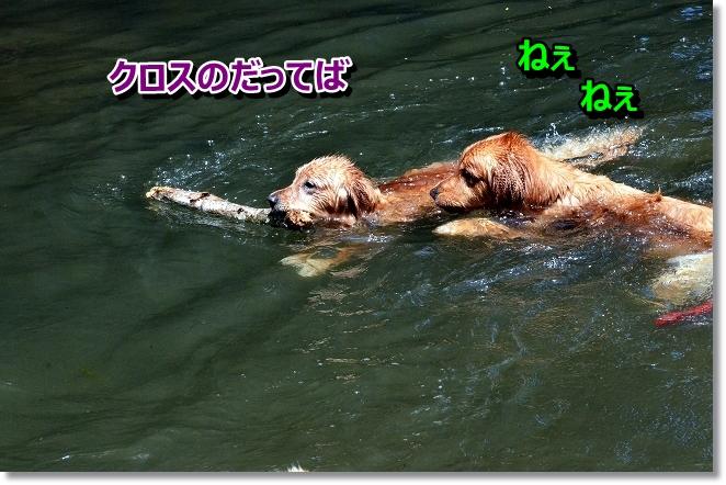 DSC_4968_20130619202035.jpg