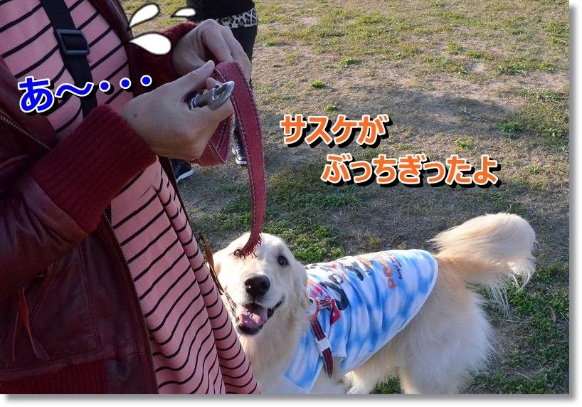 DSC_4970_201410230058564e8.jpg
