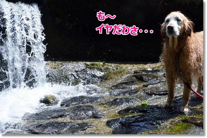 DSC_4983.jpg