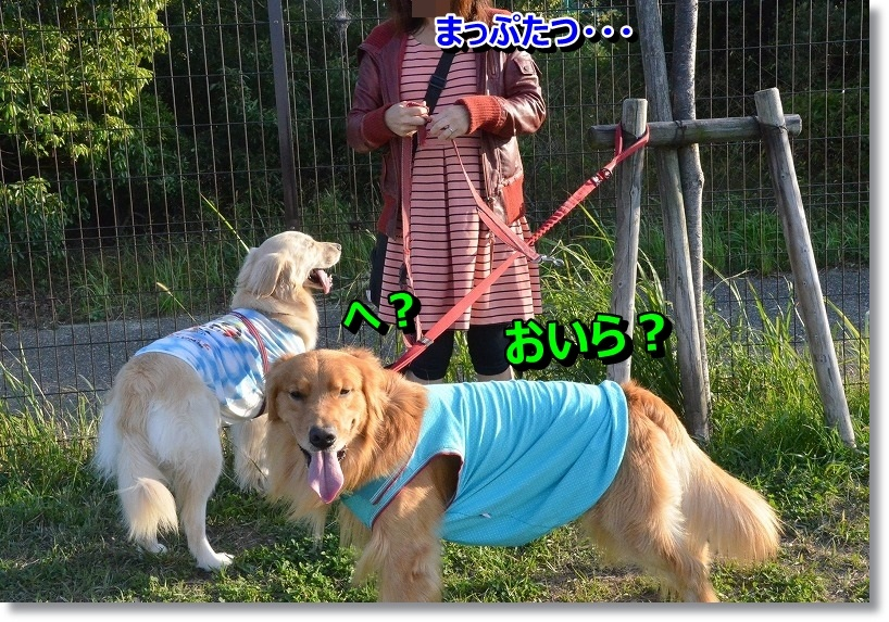 DSC_4983_201410230059535f5.jpg