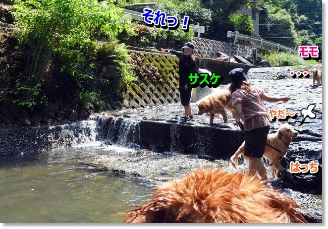 DSC_4997_20130619202206.jpg