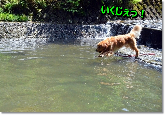 DSC_4998_20130619202207.jpg