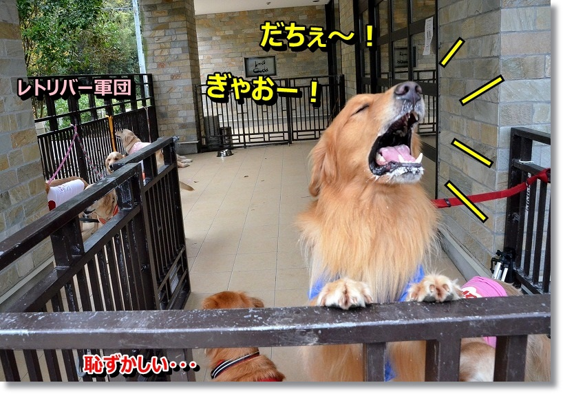 DSC_5034_20141027101808e01.jpg