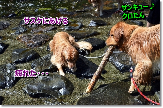 DSC_5041_20130619202230.jpg