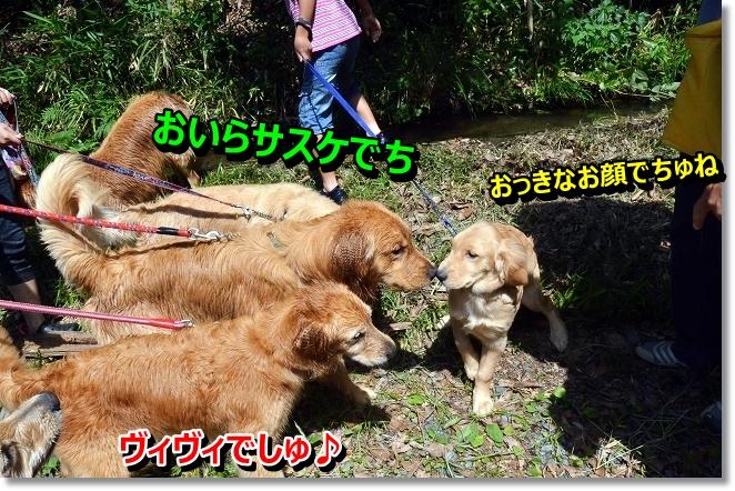 DSC_5066_20130619202254.jpg