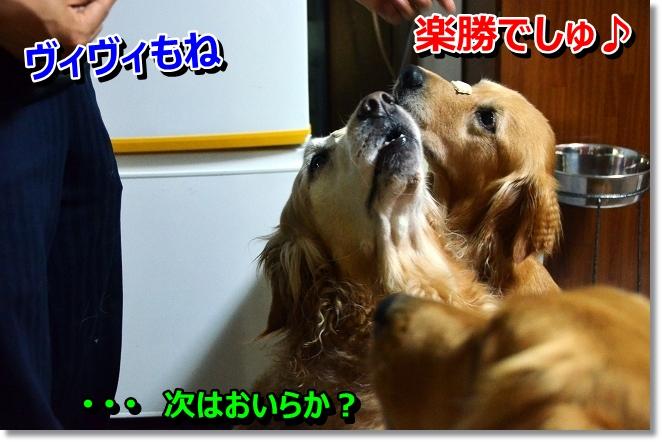 DSC_5074_20130628215549.jpg
