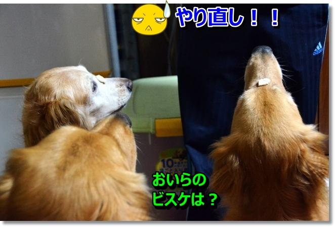 DSC_5078_20130628215631.jpg