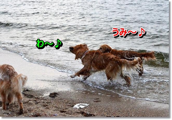 DSC_5082_20130625225512.jpg