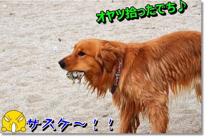 DSC_5085.jpg