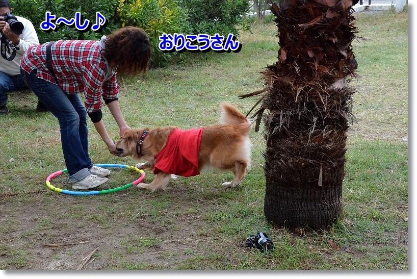 DSC_5108_20141028082358348.jpg
