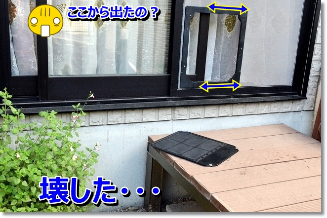 DSC_5399_20130720004622.jpg