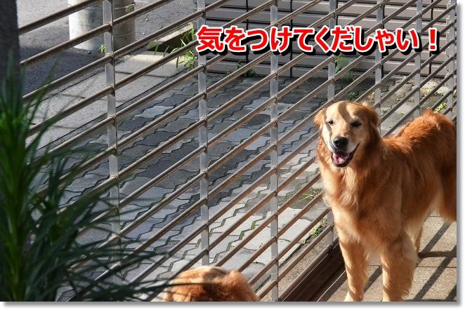 DSC_5411_20130720004646.jpg