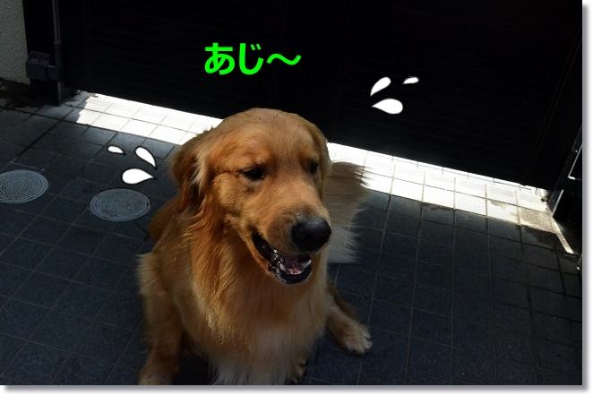 DSC_5430_20130706200605.jpg