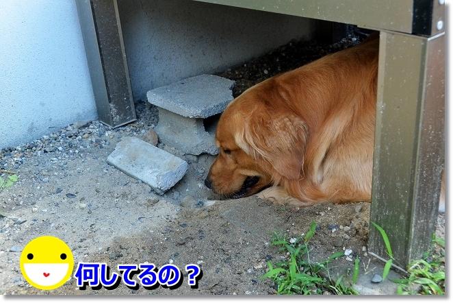 DSC_5433_20130706200607.jpg