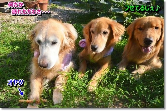 DSC_5946_20130725003610.jpg